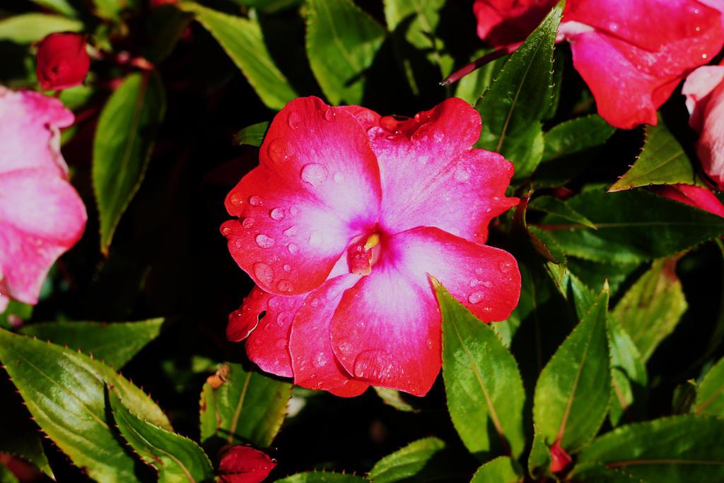 Dew Dropped Flower by pinknfuzzy4711