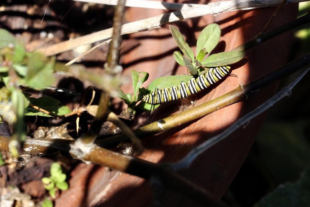 Caterpillar by pinknfuzzy4711