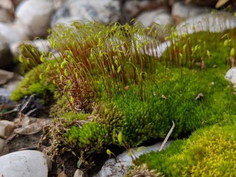 Moss 01