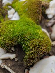 Moss 02