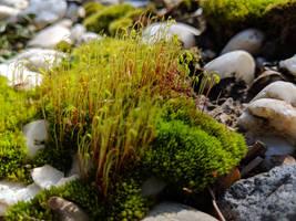 Moss 03