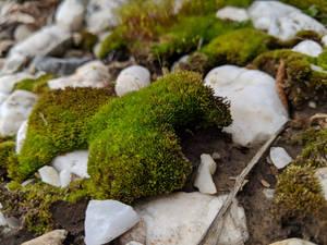 Moss 04