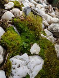 Moss 05