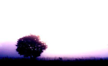 Morning by guesspump