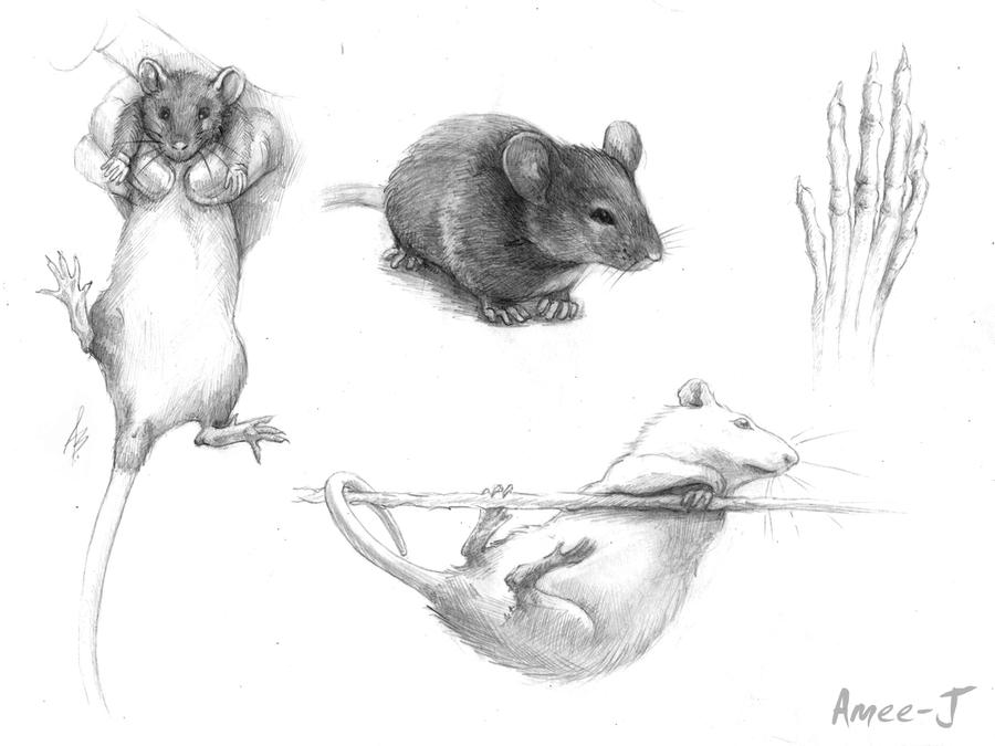 Rats by Amee-J