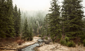 Shrouded Forest