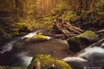 Alluring Woodland