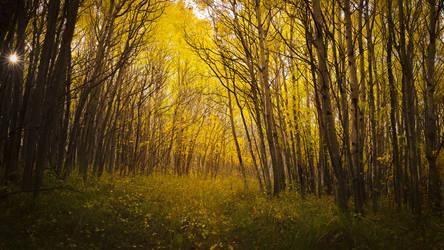 Gleaming Autumn