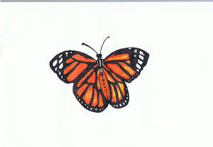 Doodle No.12 ''Colourful butterfly''