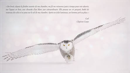Citation de Carl