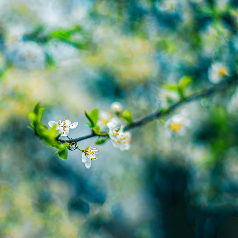 Spring View by =ifsantag