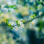 Spring View by ifsantag