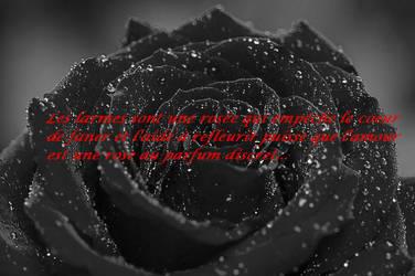 Citation sur la rose