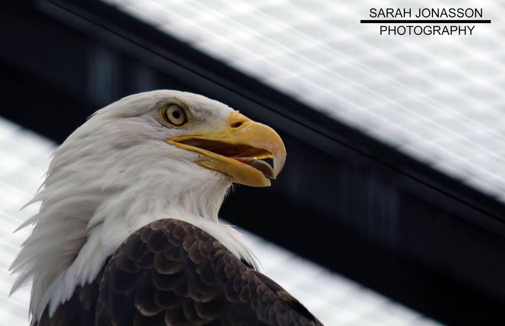Freedom by SarahJonassonPhotos