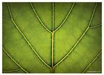 Loose Leaf by DerekProspero