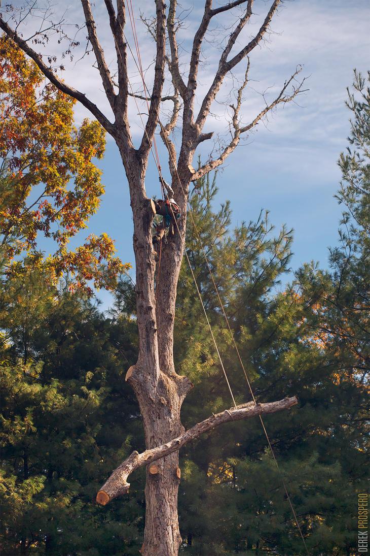 Timber! by DerekProspero