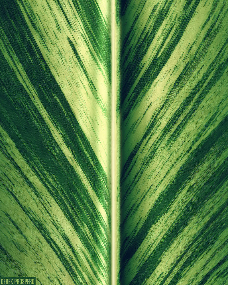 Loose Leaf 2 by DerekProspero