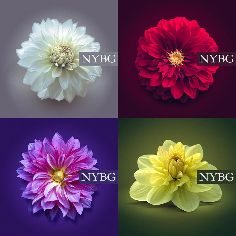 NYBG by DerekProspero