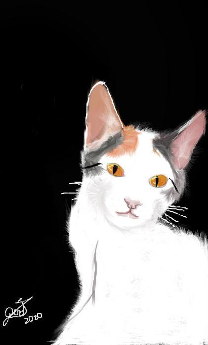 Evangeline The Cat