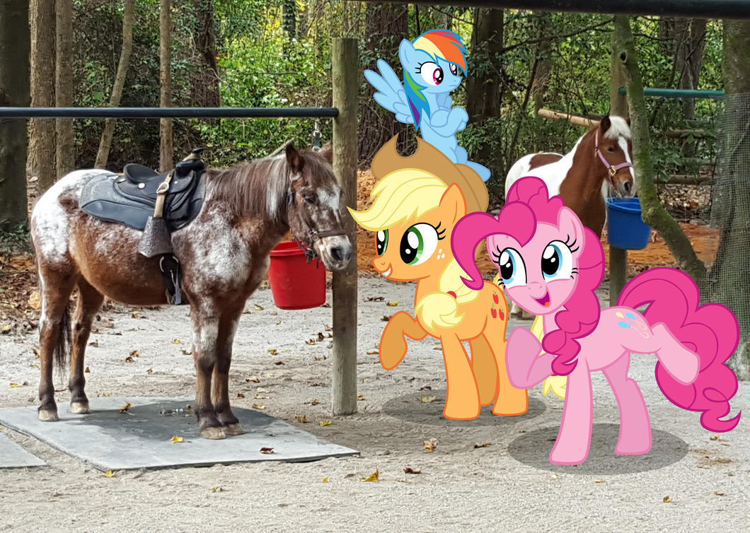the ponies meet real horses by porygon2z on deviantart