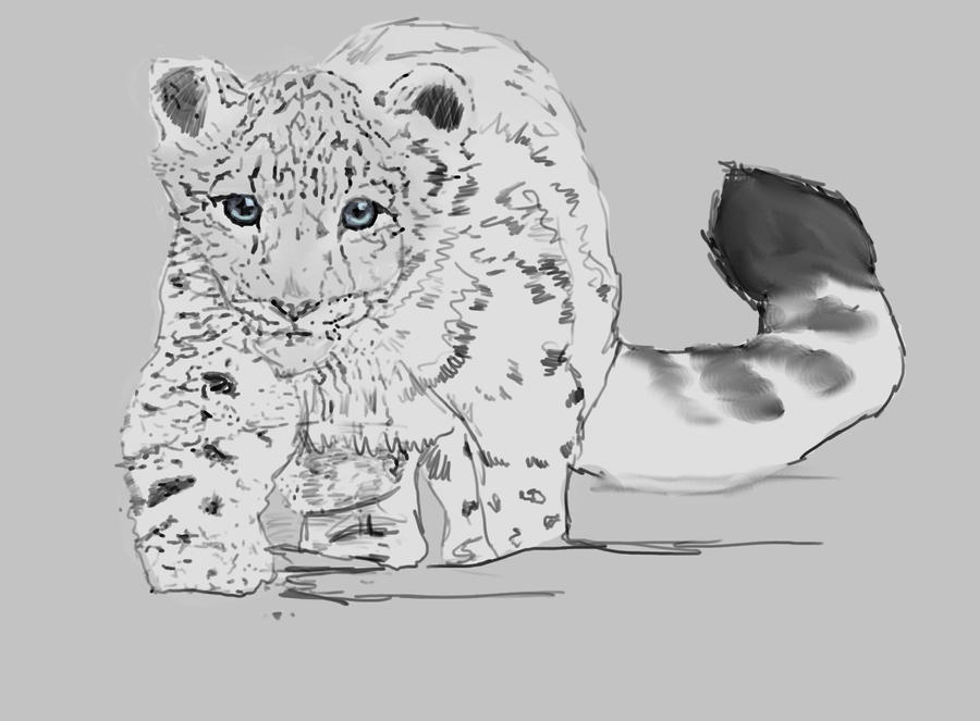 Baby White Snow Leopard Baby Snow Leopard Trace by