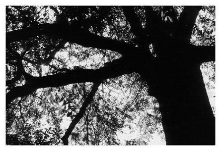 Beneath the hidden sky by arrtdamage