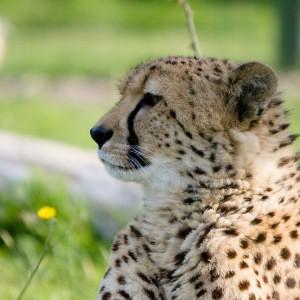Myranbor's Profile Picture