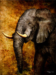 The Elephant by Roma2011