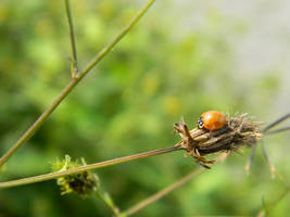 Ladybug by beri-cram
