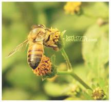 Bee by beri-cram