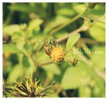 Little Green by beri-cram
