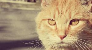 his eyes by beri-cram
