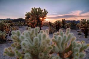 Cactus Sunset by YOSHIMETAL