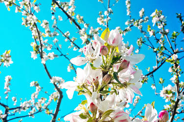 Blossom by JackieTran