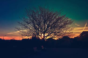Tree of life by JackieTran