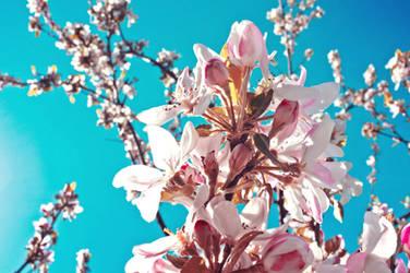 Blossom spring by JackieTran