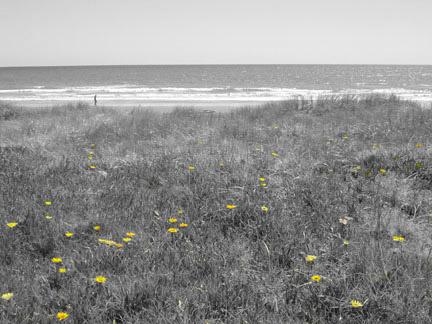 beach love by hoop479