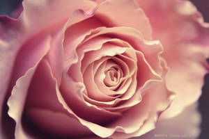 Flower tenderness by Bonyagirl
