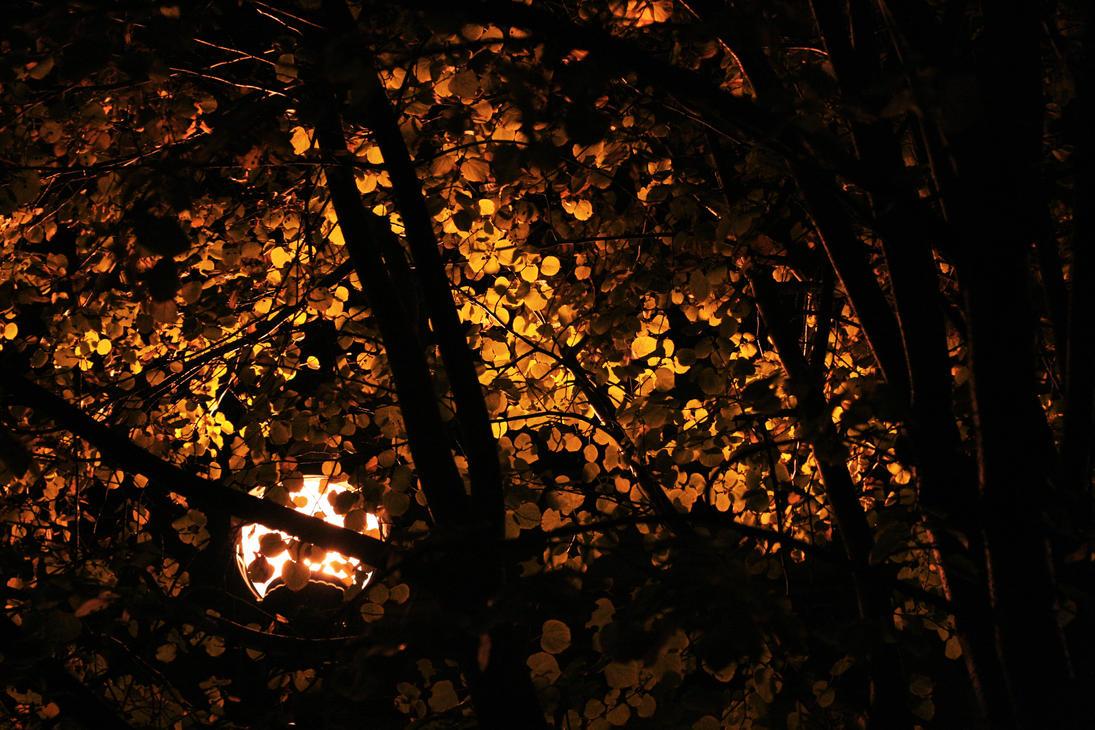 October Gold by blackdahlia