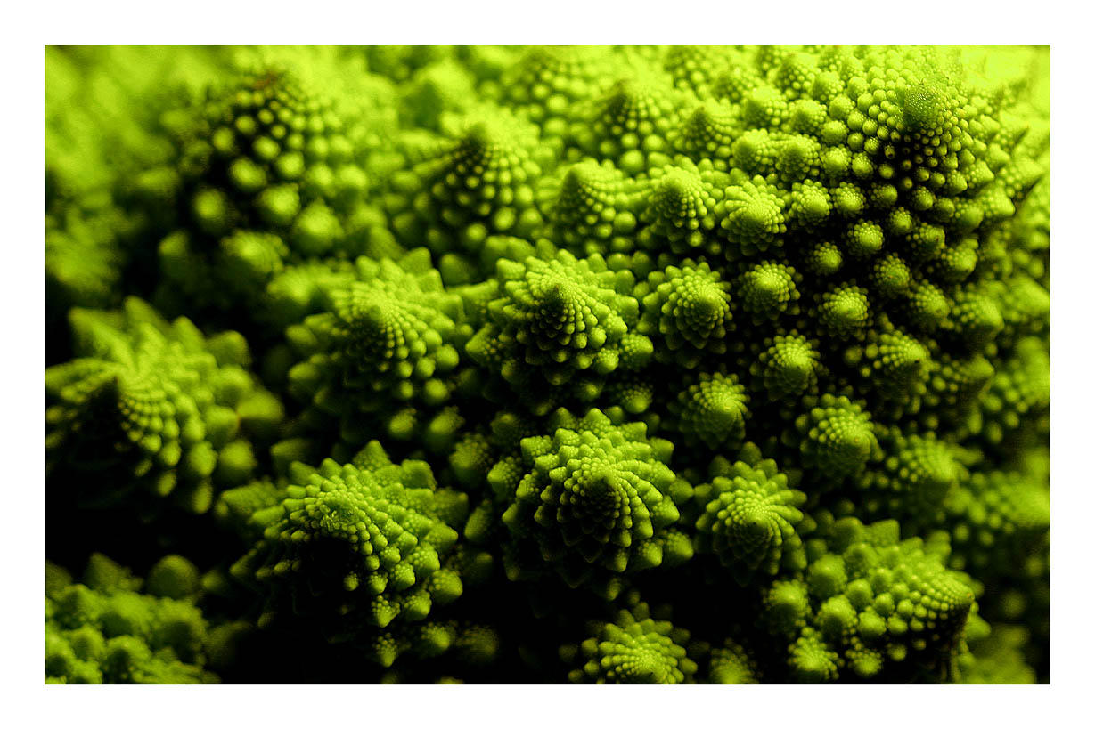 Cauliflower by katsarloki