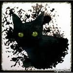 Black Cat Ink Drawing