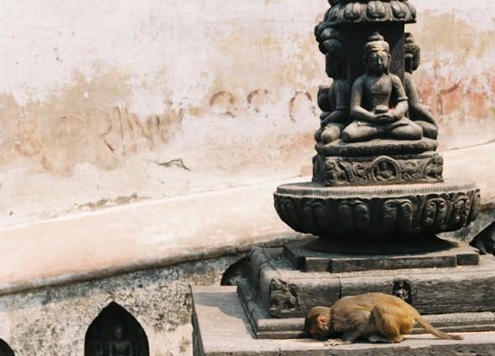 Monkeys Pray Too. by JemmaJamFace