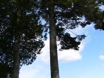 Wooden Skyline by Immortal-Dreamer