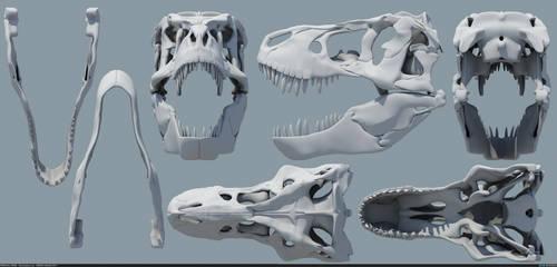 Tyrannosaurus rex Skull by MithosKuu