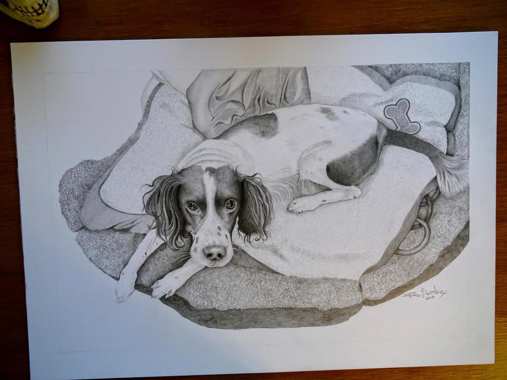 I did a portrait of my pet Springer Spaniel.. Spiz by spookyjules