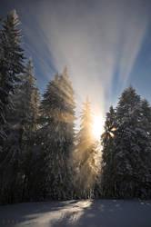 Winter Wonderland 21 by doruoprisan