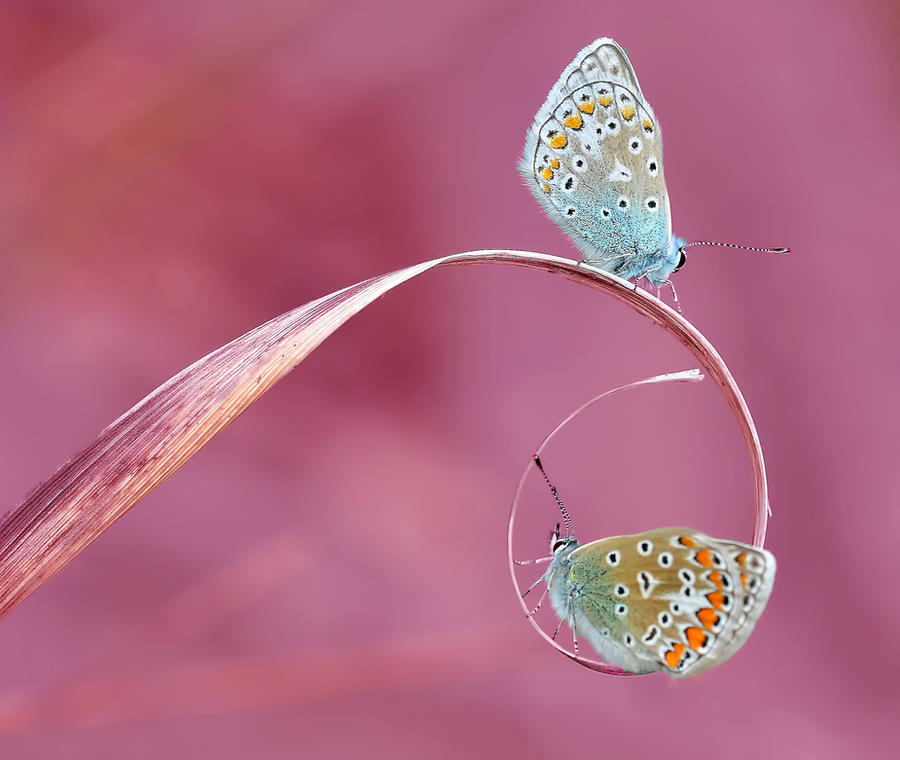 Macro Nature by PicotPhoto