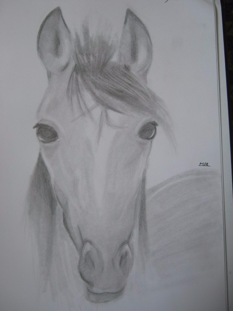 horse sketch by MeganUzumaki