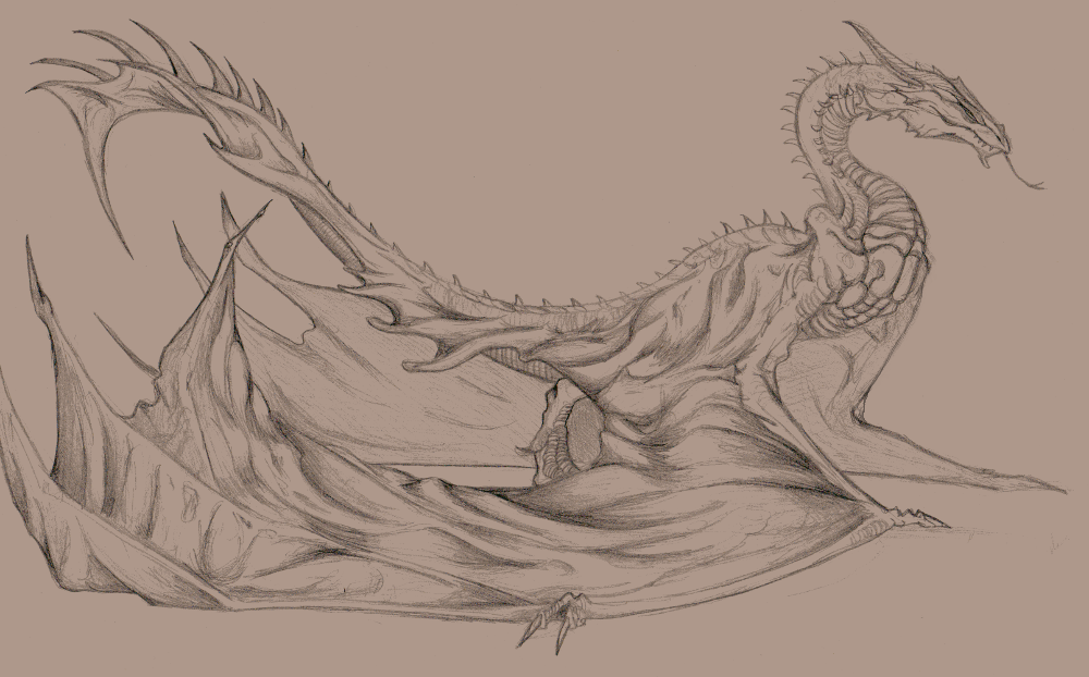 Wyvern Sketch By Big Black And Scary On Deviantart