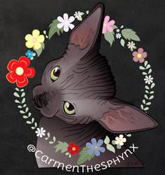 Carmen the sphynx by Lizeeeee
